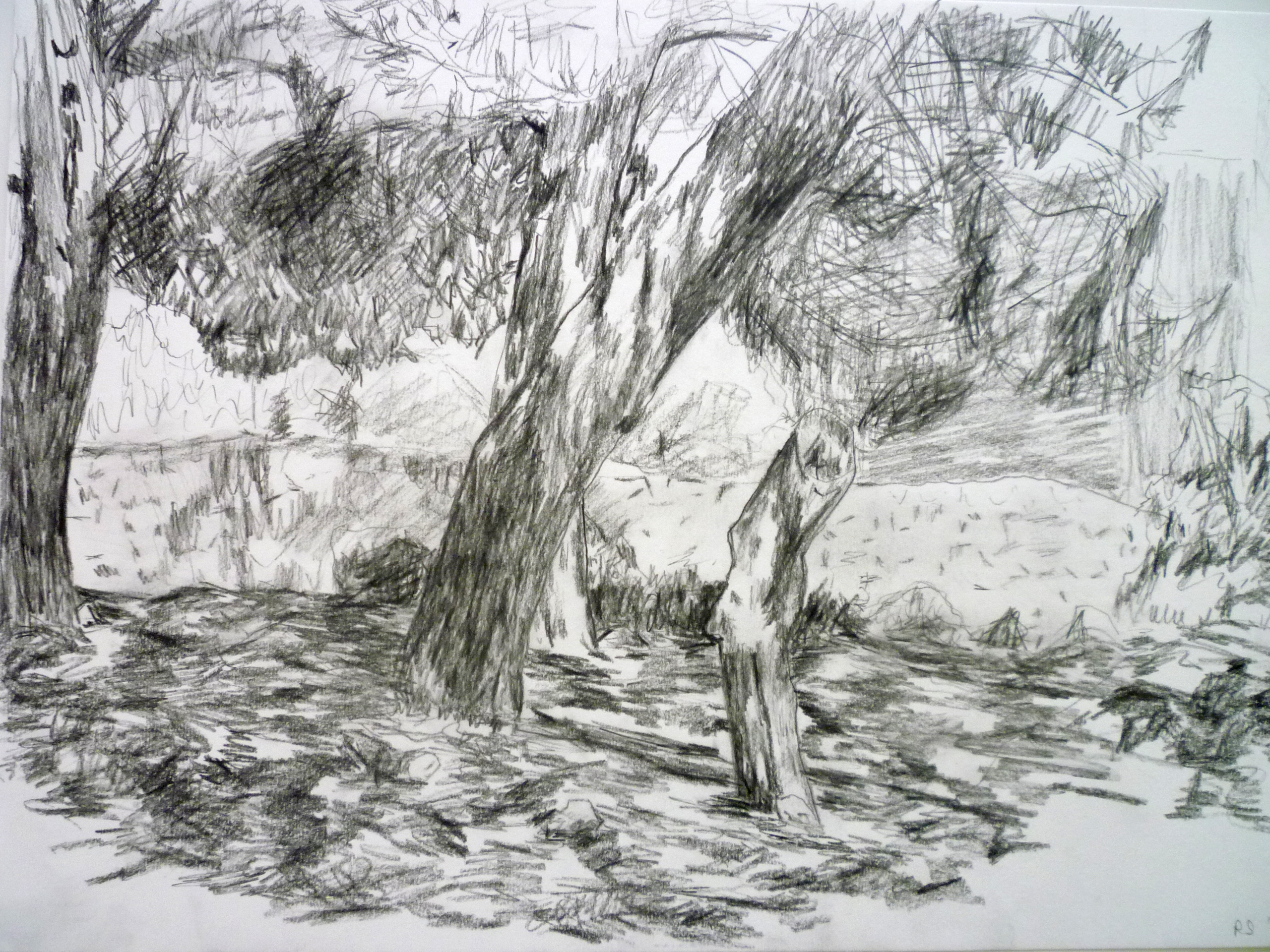 Landscape 30x 42cm [charcoal and pencil]
