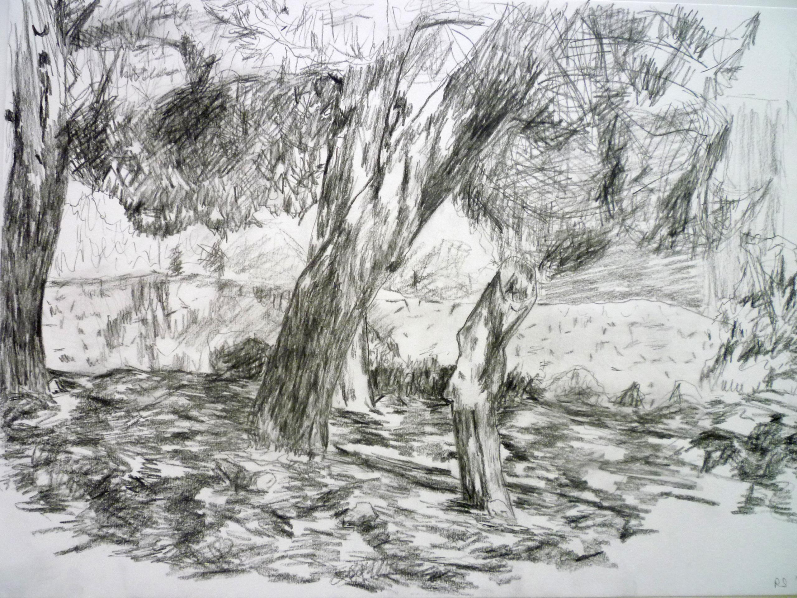 Landscape 30x 42cm [charcoal and pencil]